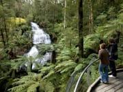 Triplet Falls, Great Otway Park
