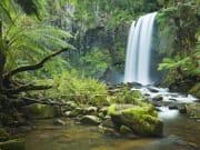 Hopetoun Falls Otway Ranges Rainforest GOR