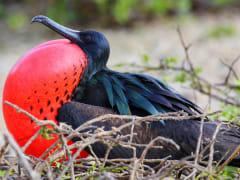 galapagos bird2-crop