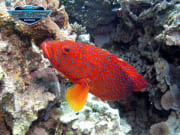 Great Barrier Reef Tour Exotic Fish