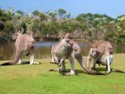 Melbourne Phillip Island Wildlife Park