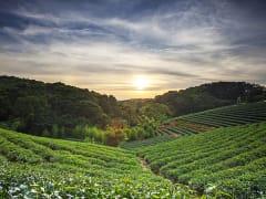 Bagua Tea Plantation Taipei