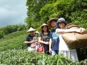 Tea Culture2