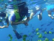 Sea Hawaii 05