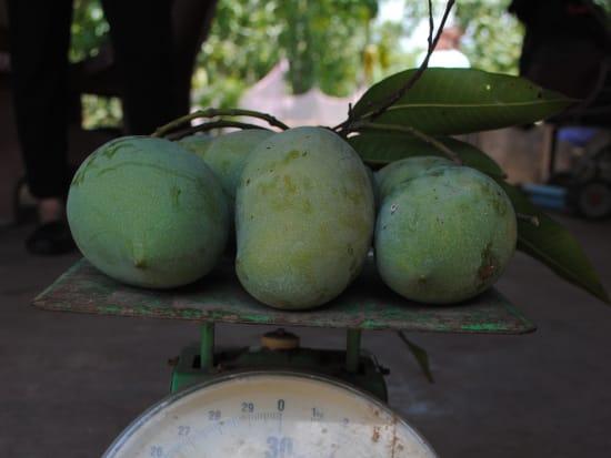 マンゴー量り売り