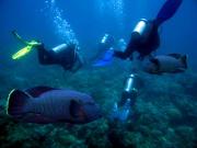 Australia_Brisbane_Diving_shutterstock_29928565
