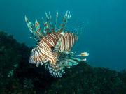 Australia_Brisbane_HMAS_Brisbane_Diving_shutterstock_260727362