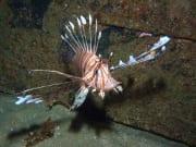 Australia_Brisbane_HMAS_Brisbane_Diving_shutterstock_260727389