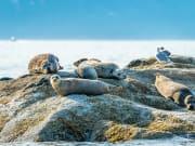 Vancouver Seals