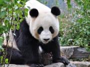 Australia_Adelaide_Zoo_shutterstock_94996834