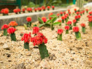 Malaysia_Penang_Botanical_Gardens_shutterstock_555179893