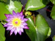 Malaysia_Penang__Botanical_Gardens_shutterstock_515969974