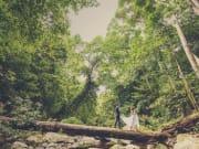 熱帯雨林-2