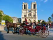 Notre-Dame, Horse, Carriage Ride