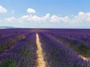 Provence Lavender Tour from Avignon