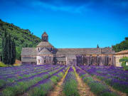 Provence Lavender Tour from Avignon