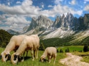 Venice Dolomites