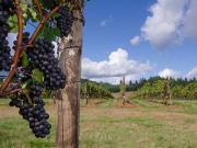USA_Portland_Evergreen_Willamette Wine
