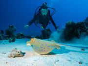Australia_Cairns_Great_Brrier_Reef