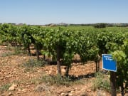 Vineyards in Chateauneuf-du-Pape Provence