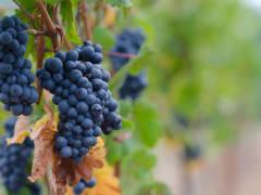 winery01