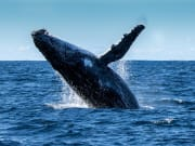 Australia_ Whale_shutterstock_365791514
