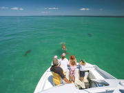 dugong cruise at tangalooma resort moreton island