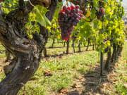 USA_Portland_Oregon_Wine tasting