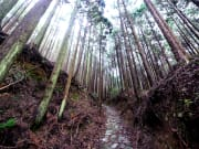 Japan_Wakayama_Kumano_Taisha_path_shutterstock_535112023