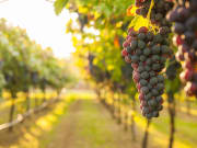 bickley valley wine tasting tour