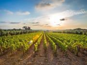 bickley valley vineyard perth australia