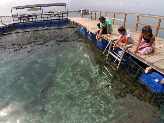 Bali_sharkfeeding