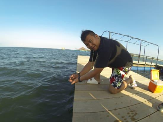 Bali_sharkfeeding2