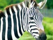 MIA_Lion_Country_Safari