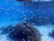 幻の島&体験ダイビング (14)
