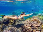 snorkelling-port-douglas-aquaquest_orig