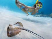 snorkel-port-douglas-divers-den_orig