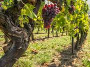Generic_Wine_shutterstock_354878756