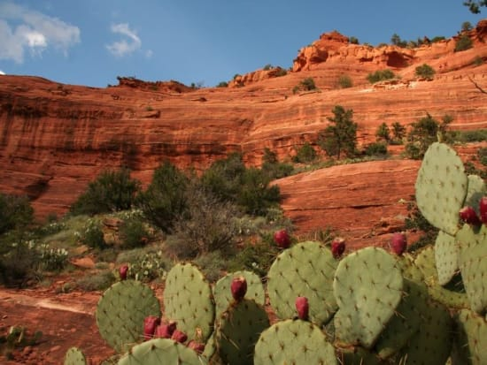 DETOURS_AZ_Sedona_Red Rocks and Prickly Pears_SC