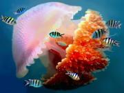 Australia_Cairns_Great_Barrier_Reef_shutterstock_109115021