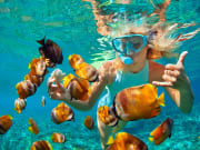 Snorkel and swim with colorful fish