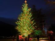 Canada_Victoria_Butchart Gardens_Christmas Tree
