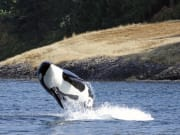 canada_victoria_whale watching cruise