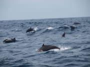 lovina beach dolphin watching