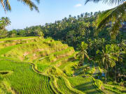 Indonesia_Bali_Ubud_Tegallalang_Rice_Terrace_shutterstock_236578609