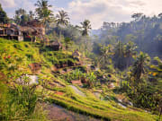 Indonesia_Bali_Ubud_Tegallalang_Rice_Terrace_shutterstock_316997570