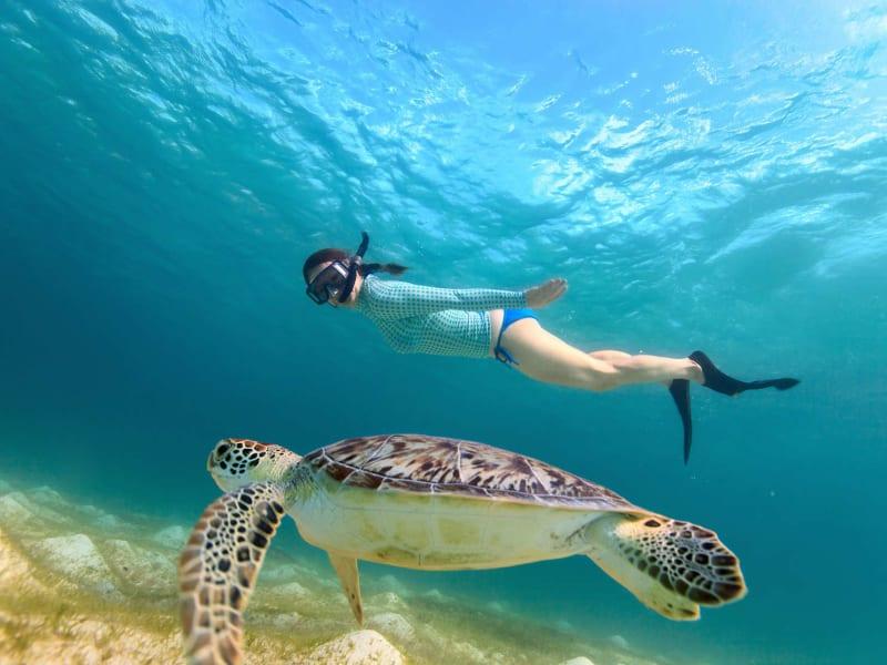 Lanai Snorkeling Cruises (Snorkeling Cruises & Tours), Maui tours &  activities, fun things to do in Maui | HawaiiActivities.com