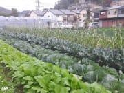 -京野菜産地を訪問
