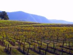 Vineyards of Hunter Valley