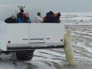 Tundra Buggy and Polar Bear - Frontiers North